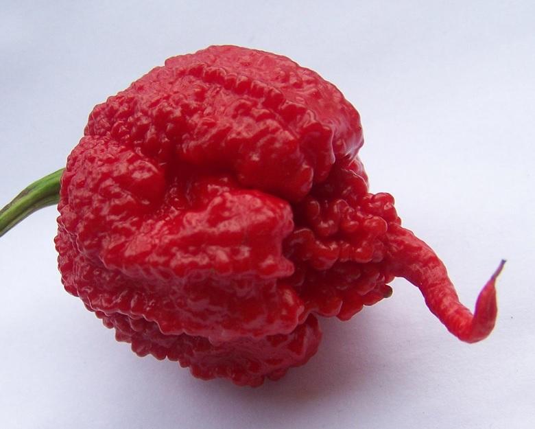 GUINNES 30  SEMI DI CAROLINA REAPER  peperoncino piu piccante al mondo  HP22B